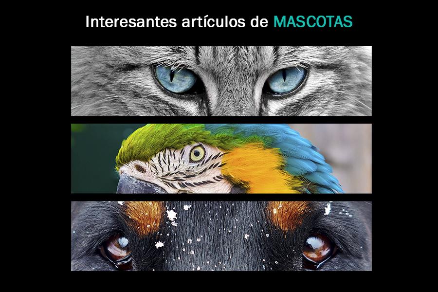 Sección de artículos de Mascotas.
