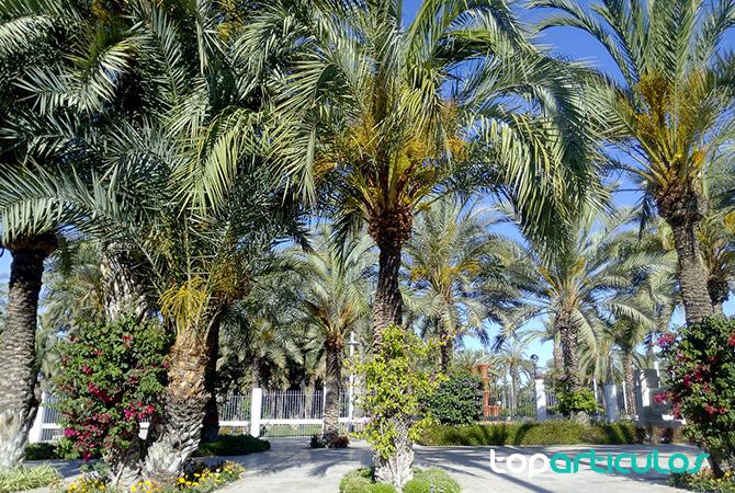 Vistas del Palmeral de Elche (Alicante)