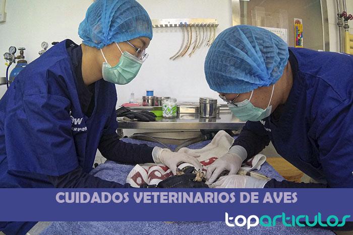 cuidados de un canario por parte de unos veterinarios