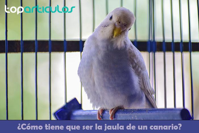 Un canario en su jaula