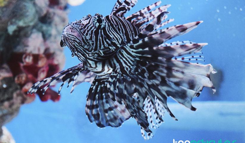 Qu diferencias hay entre acuarios marinos y dulces para - Montaje de acuarios ...