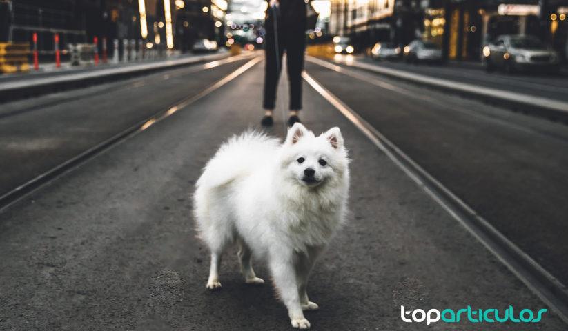 Normas para pasear a tu perro que deberías conocer