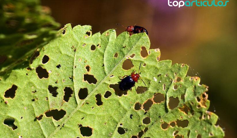 7 Remedios naturales para controlar las plagas