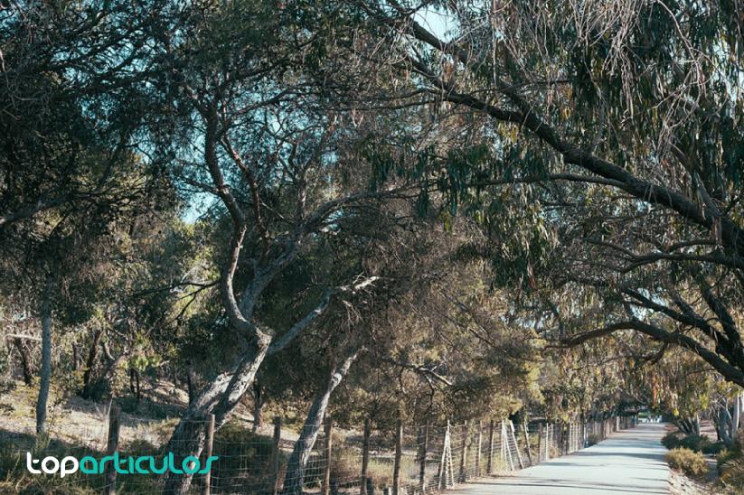 Parque Alfonso XIII, en Guardamar
