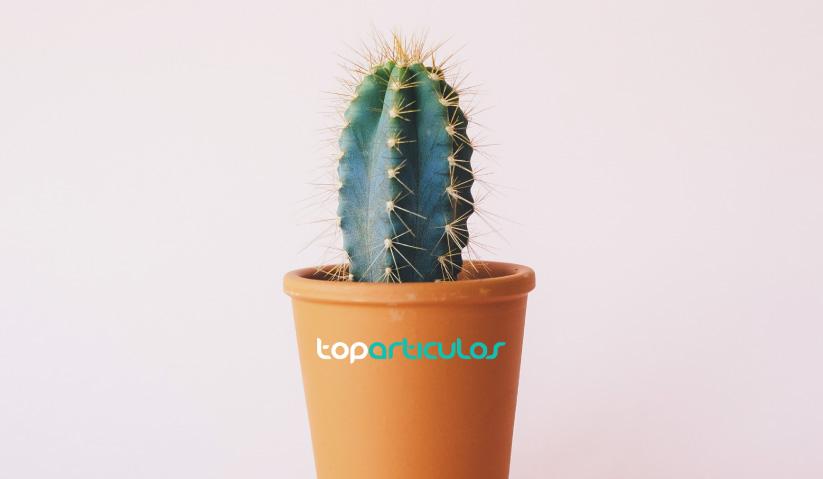 Elige plantas de interior si no tienes mucho tiempo
