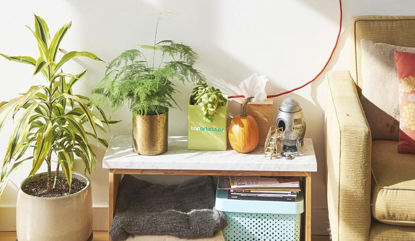 Una vivienda decorada con plantas es mucha más acogedora