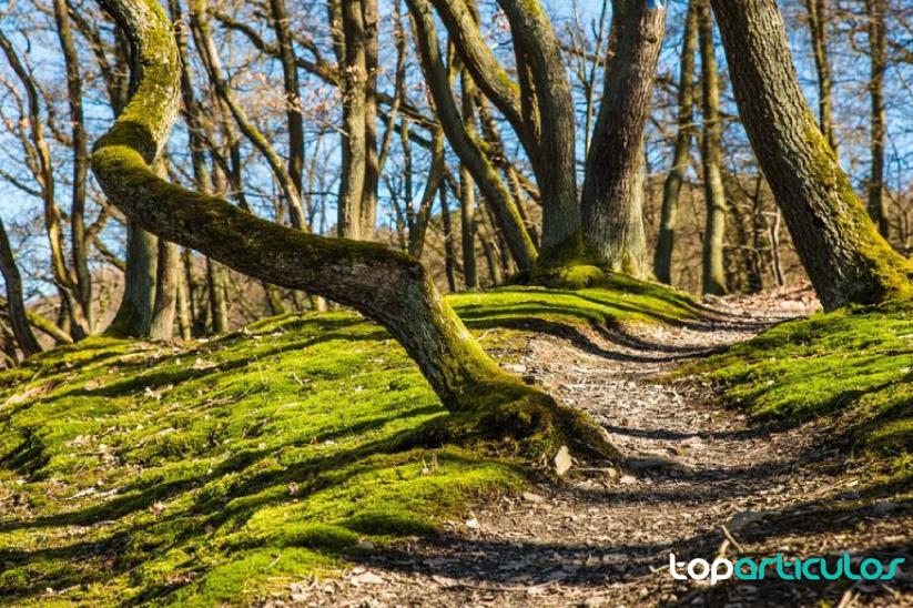 Escapada a una casa rural en alicante, la mejor opción para disfrutar de la naturaleza