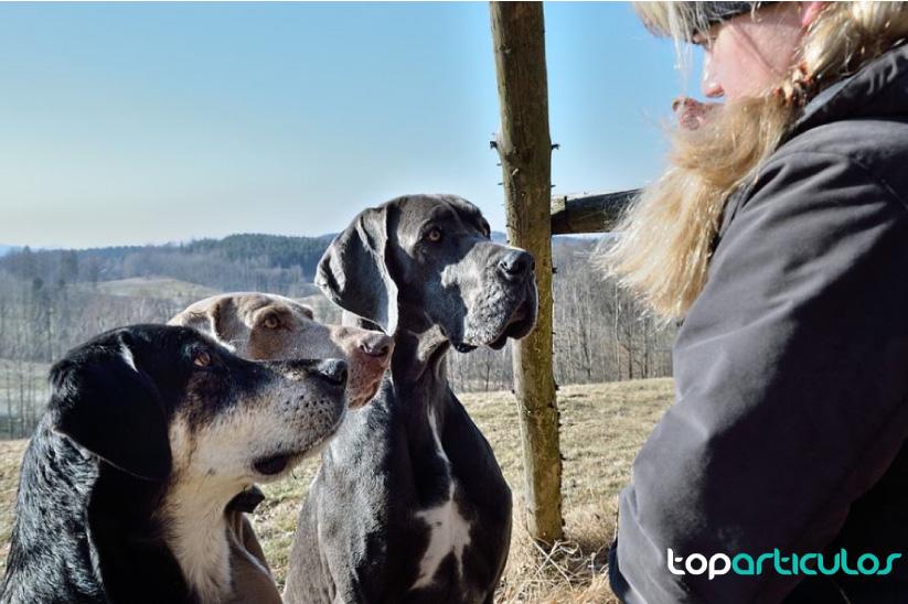 Las residencias caninas y todas sus ventajas