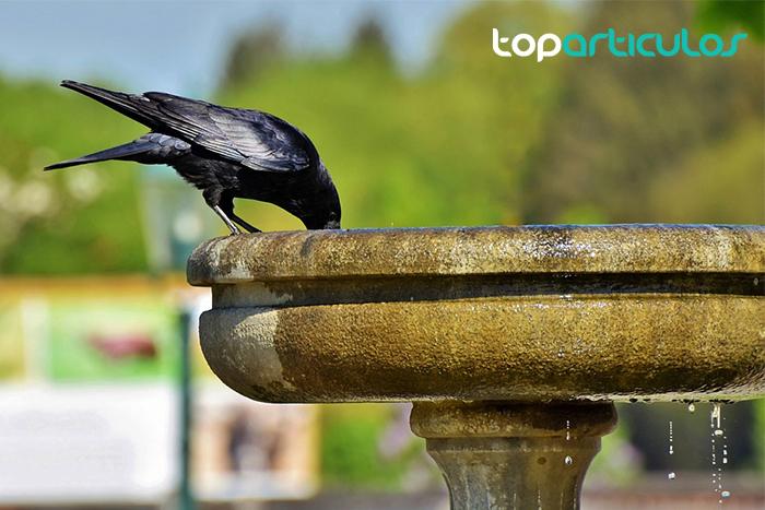 Pájaro posado sobre fuente en jardin.