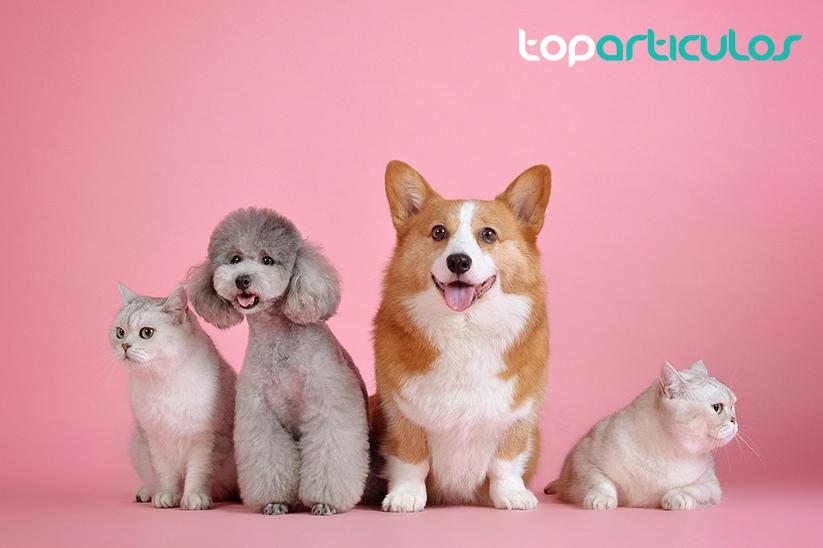 Imagen de mascotas: 2 perros y 2 gatos.