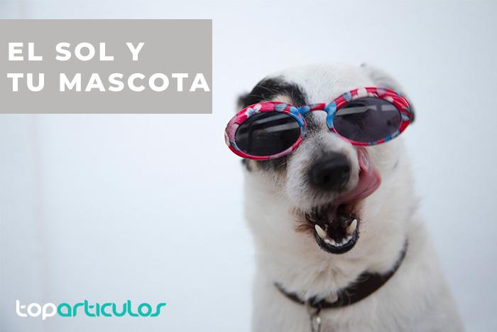 Un perro con sus gafas de sol preparado para su paseo al sol.