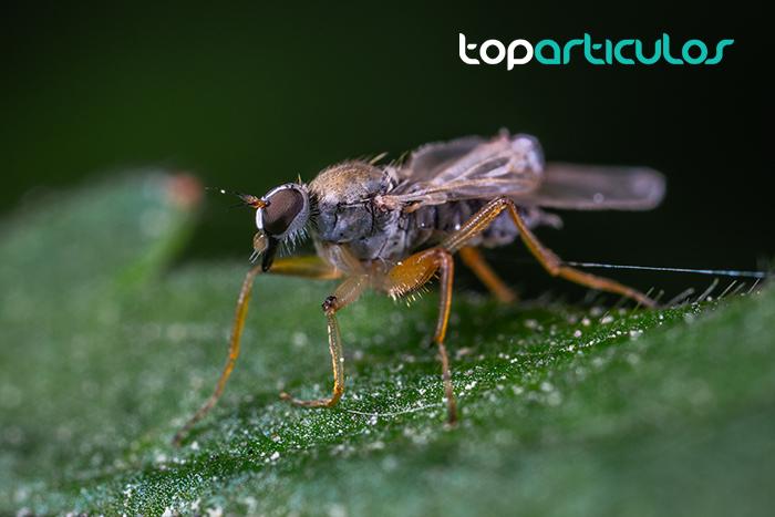 Foto de un mosquito, eliminar plagas de mosquitos es una tarea compleja.