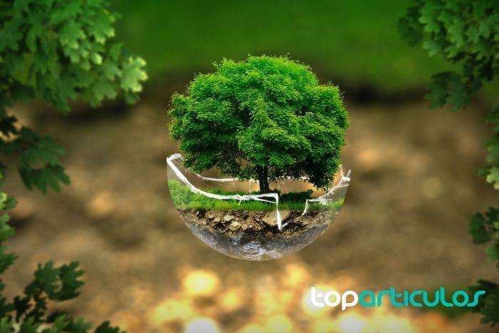 Imagen de una esfera que protege a un árbol y al medio ambiente.
